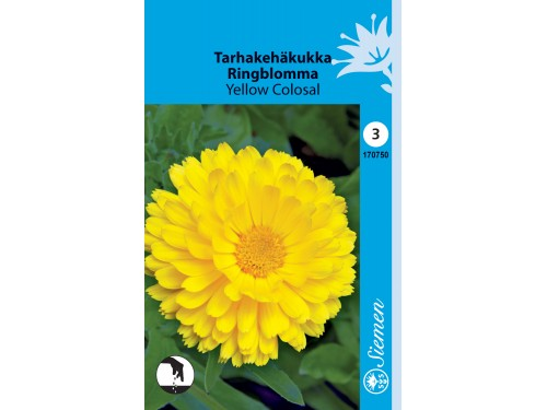 Tarhakehäkukka 'Yellow Colosal'